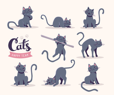 pussy hair: Vector collection of illustration of cute gray cat in various poses and text with cat paw prints on white background. Flat style design for greeting card, poster, web, site, banner, sticker, logo
