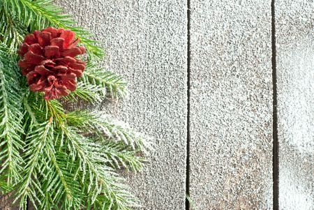 White Christmas background with cone and spruce branch photo
