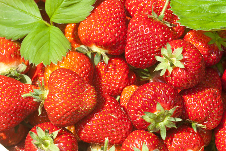 Closeup of fresh organic strawberries with leaves