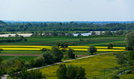 oilseed: View of the Vistula river valley with flowering oilseed rape fields in the area of Janowiec