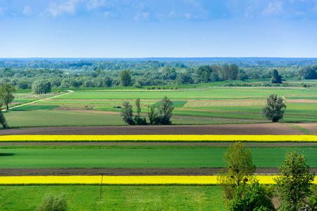 kazimierz: Spring landscape with yellow oilseed plants stripes near Kazimierz in Poland