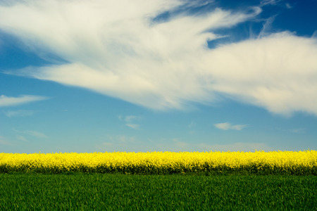 Countryside landscape with yellow rape flowers and blue sky Stock Photo