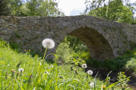 White dandelion and old stone bridge in Olchowiec, Beskid Niski, Poland Imagens