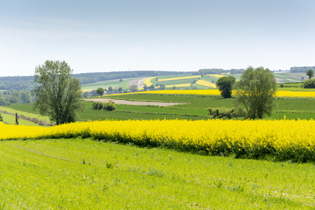 Spring landscape of the Roztocze region in Poland with agricultural fields of rapeseed yellow flowers