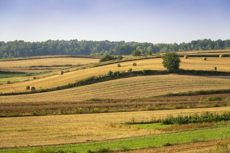 Beautiful rolling hills after the harvest in the Roztocze region near Batorz, Poland