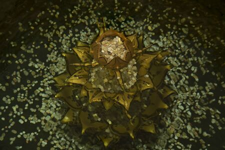 Blur and movement of the four golden lotus flowers under the water and there are coins inside and around. it is teachings of Lord Buddha.