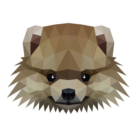 spitz: Vector symmetrical illustration of a pomeranian spitz dog on a white background. Made in low poly triangular style.
