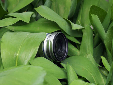 The camera lens is peeking out of the foliage, the photographer is hiding in the forest to take a photo of the wildlife for education. Secret work of a photographer, paparazzi.