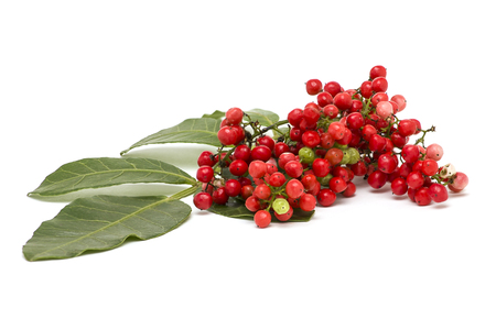 Pistacia lentiscus, lentisk red Berries isolated on white background