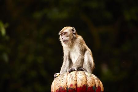 Monkey sitting on a stone structure photo