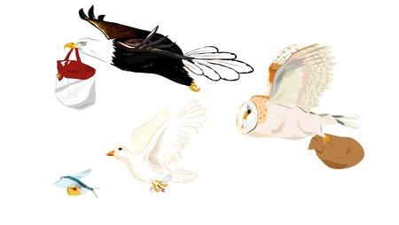 pigeon owl: Brid ti sent massage