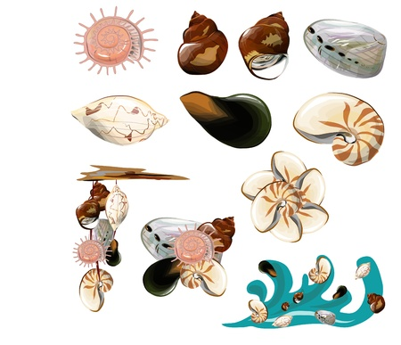 Collection of shell