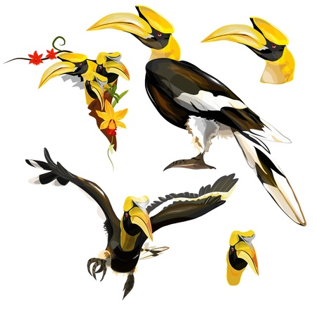 hornbill: Collection of Hornbill