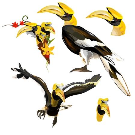 hornbill: Collection of Hornbill