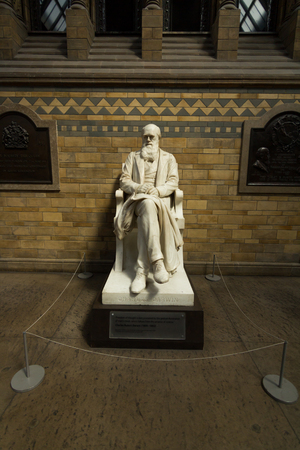 natural selection: A statue of Charles Darwin in the Science Museum, London