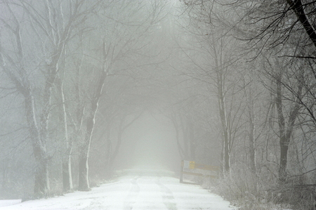 Tree lined trail in fog