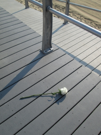 Single rose bud on boardwalk
