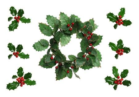 ilex aquifolium holly: Christmas holly wreath and European holly (Ilex aquifolium)  isolated on white