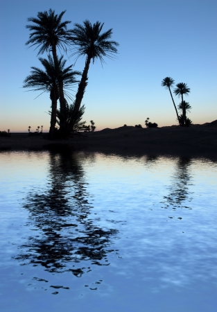a mirage: Silhouetted palm trees near the lake in the Sahara Desert, Morocco, at sunrise