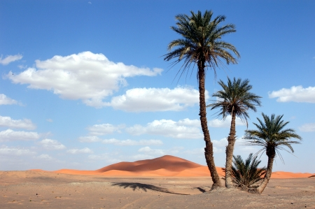 Palm trees in the Sahara Desert, Morocco Stock Photo