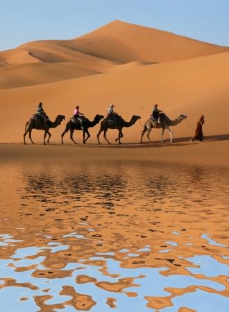 desierto del sahara: Caravana de camellos pasando por el lago del Desierto del Sahara, Marruecos. Foto de archivo