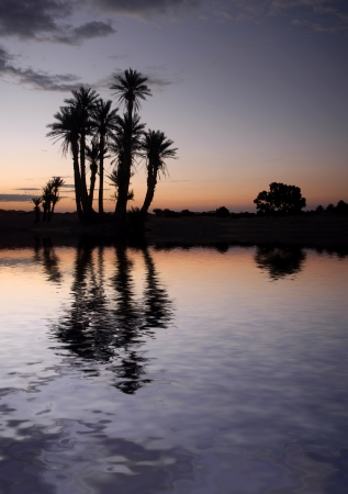 Silhouetted palm trees near the lake in the Sahara Desert, Morocco, at sunrise Stock Photo - 15550798