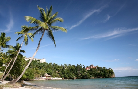 Palm Trees on the seashore in the Dominican Republic photo