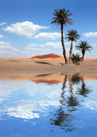 a mirage: Palm trees near the lake in the Sahara Desert, Morocco