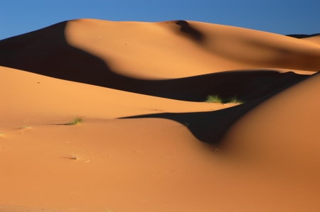 erg: Sand dunes of Erg Chebbi in the Sahara Desert, Morocco.