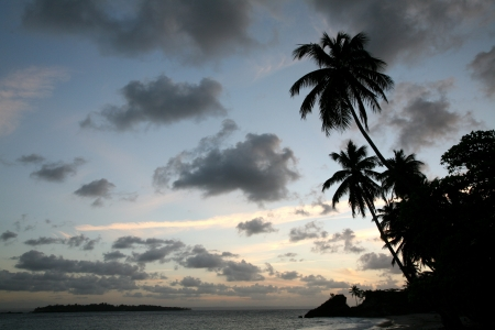 Palm Trees on the sea shore at sunset in the Dominican Republic photo