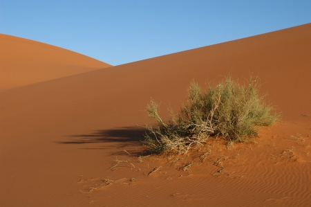Sand dunes of Erg Chebbi in the Sahara Desert, Morocco. Stock Photo - 15560369