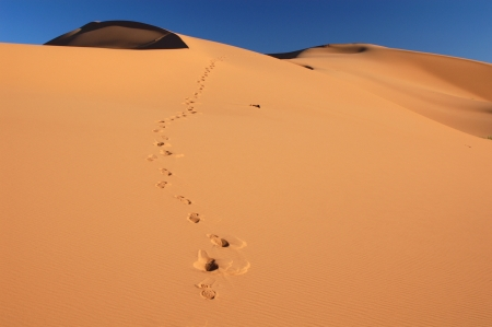 inhospitable: Human footsteps in the sand in the Sahara Desert, Morocco