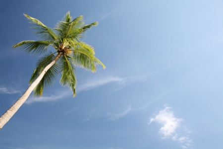 Palm tree with blue sky background photo