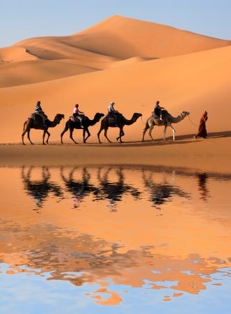 erg: Camel caravan going along the lake the Sahara Desert, Morocco.