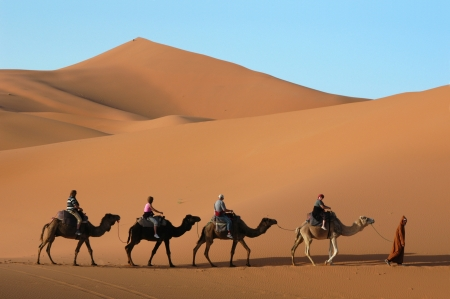 Camel caravan going through the sand dunes in the Sahara Desert, Morocco