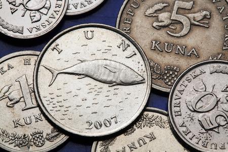 thunnus: Coins of Croatia. Atlantic bluefin tuna (Olea Thunnus thynnus) depicted in the Croatian two kuna coin.