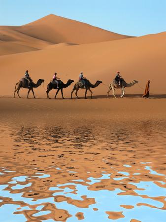 Camel caravan going along the lake the Sahara Desert, Morocco. photo