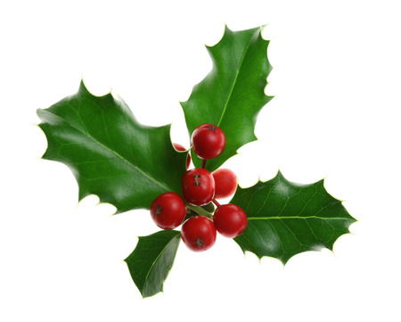 Sprig of European holly (Ilex aquifolium) isolated on white Stock fotó - 34596515