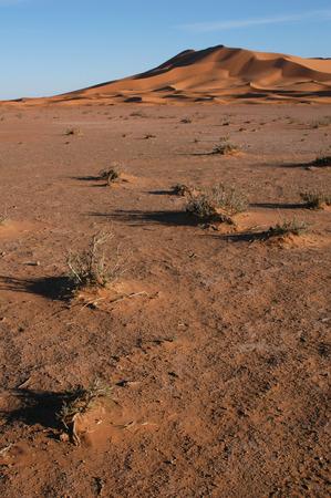hummock: Sand dunes of Erg Chebbi in the Sahara Desert, Morocco.