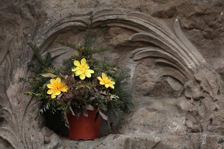 garrison: Yellow flowers at the Josefov Garrison Cemetery in Jaromer, Central Bohemia, Czech Republic.