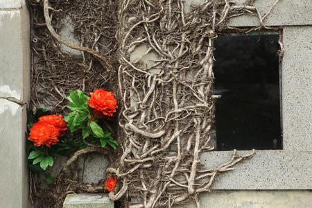 terezin: Lapide Overgrown al cimitero abbandonato a Terezin, Repubblica Ceca.