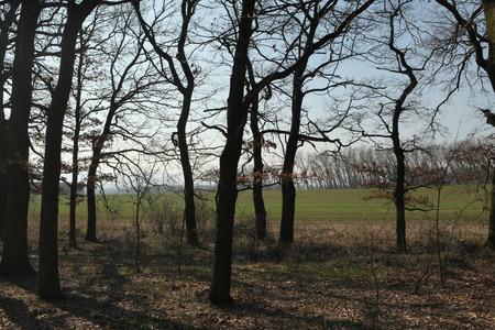bohemia: Bare trees in Northern Bohemia, Czech Republic.
