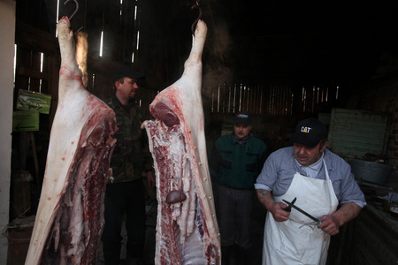 skinning: TURNOV, CZECH REPUBLIC - MARCH 5, 2011: Butcher cuts up a pig during the traditional Shrovetide public pig slaughter called zabijacka in Vsen near Turnov, Czech Republic.