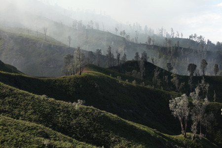 Tropical forest in the fumes of toxic volcanic gas at the slopes of Kawah Ijen volcano, East Java, Indonesia. photo