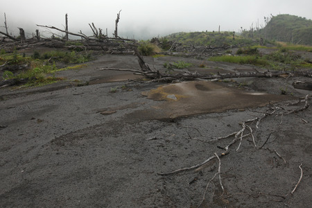 devastated: Tropical forest destroyed by volcanic eruption on the slopes of Mount Merapi (2,930 m) in Central Java, Indonesia.