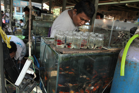 YOGYAKARTA, INDONESIA - JULY 31, 2011: Vendor sells aquarium fishes at the Pasar Ngasem Market in Yogyakarta, Central Java, Indonesia.