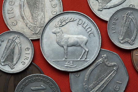 cervus: Coins of Ireland. Red deer (Cervus elaphus) depicted in the Irish one pound coin. Stock Photo