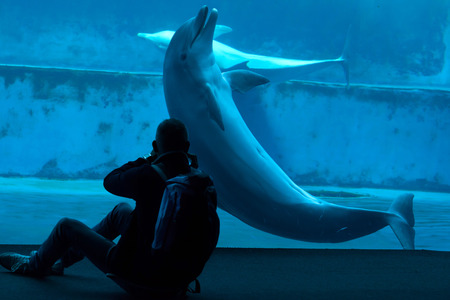 bottlenose: GENOA, ITALY - MARCH 22, 2016: Visitor takes photos as common bottlenose dolphins (Tursiops truncatus) swim in the Genoa Aquarium in Genoa, Liguria, Italy. Editorial