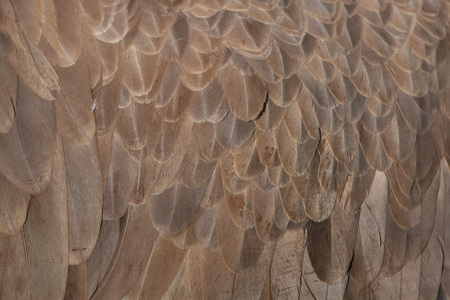 black plumage: Cinereous vulture (Aegypius monachus), also known as the black vulture or monk vulture. Plumage texture. Stock Photo