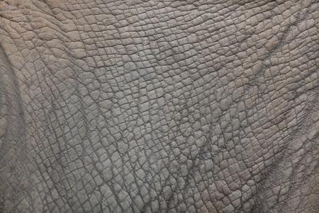 ungulate: Southern white rhinoceros (Ceratotherium simum simum). Skin texture.